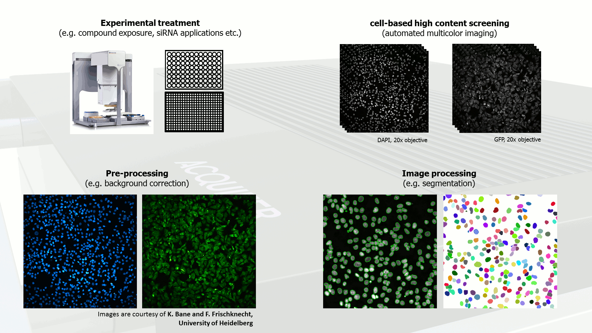 Acquifer HCS Workflow - high-content-screening-cells