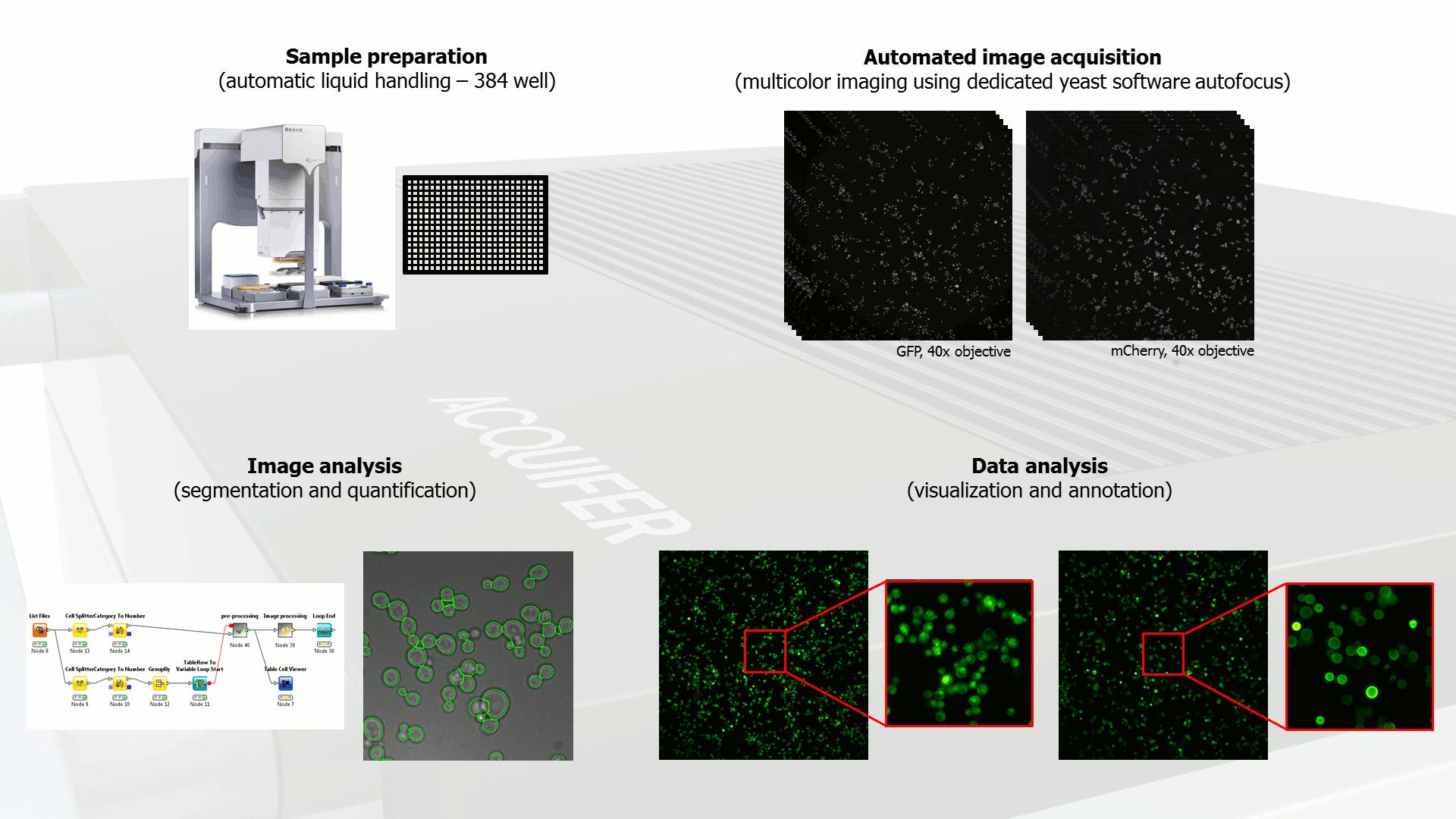 Acquifer HCS workflow-yeast